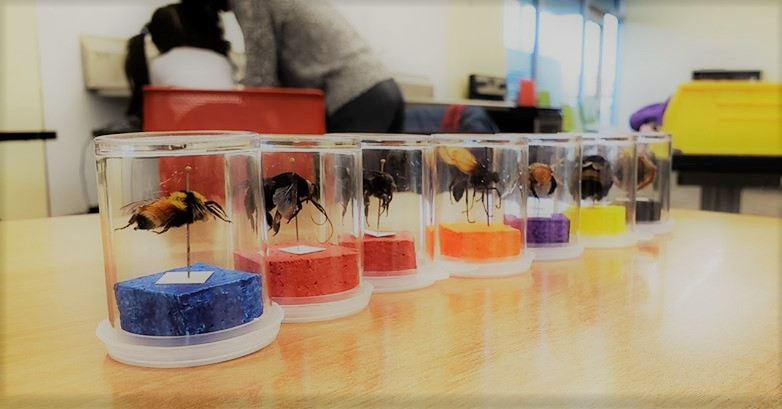 Entomological samples of tropical bees